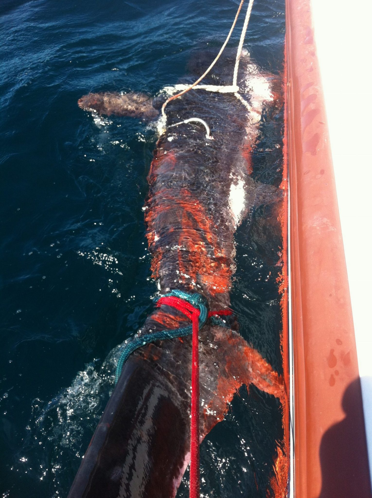 shark fishing atlantic city nj