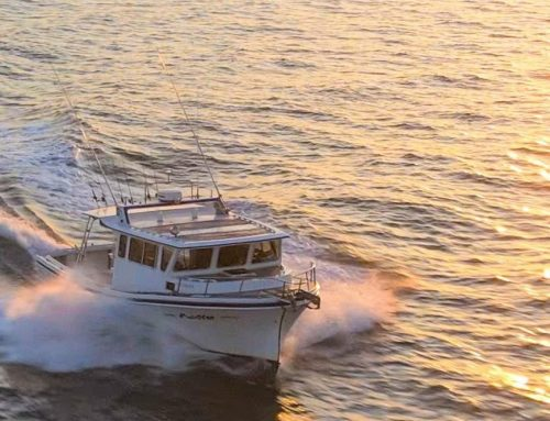 October Open Boat Trips Sea Bass, Ling, etc.  Reef and wreck Trips 10/8,13,20