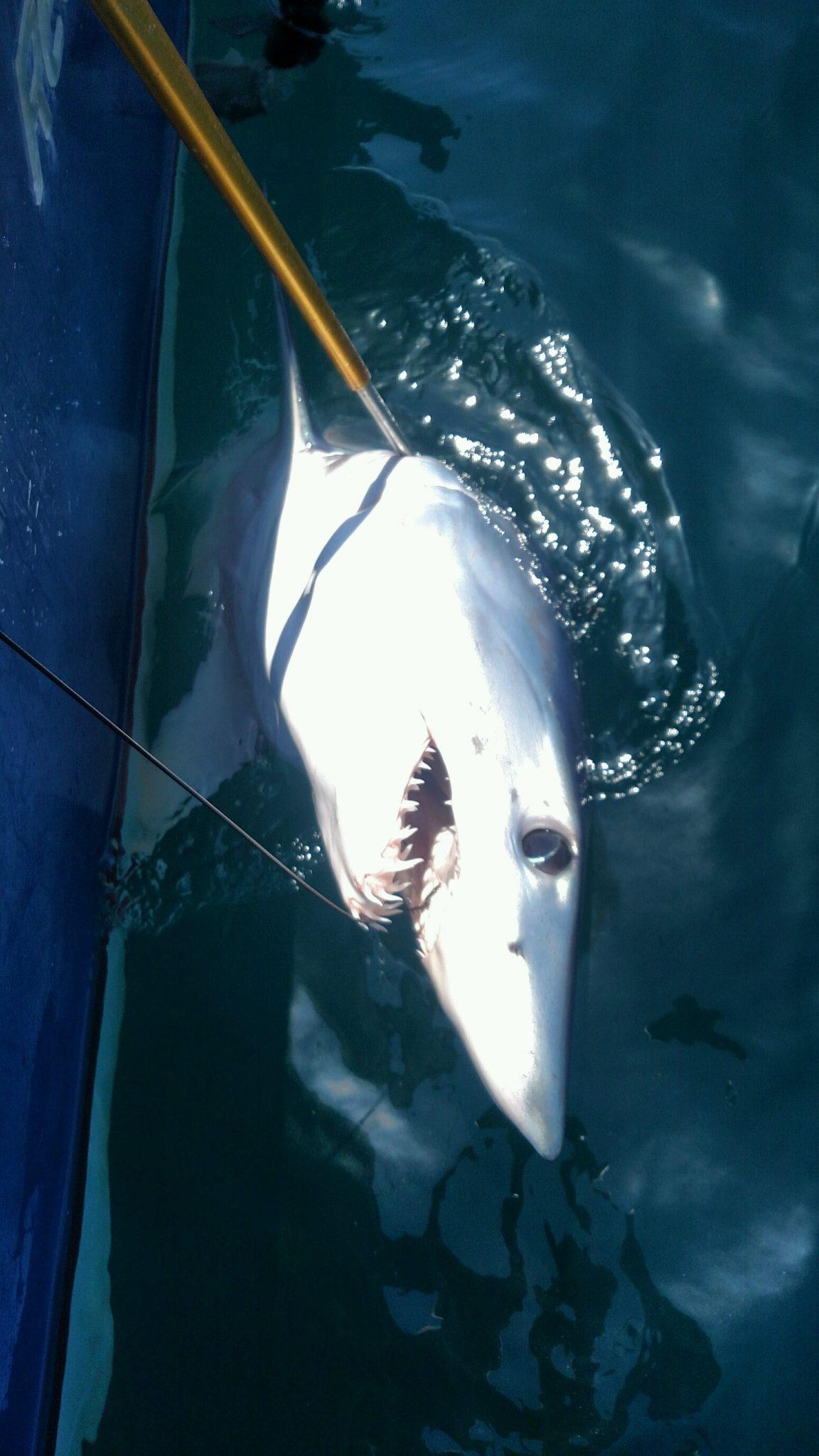 The fishing is good atlantic city ocean city nj for Ocean city nj fishing charters