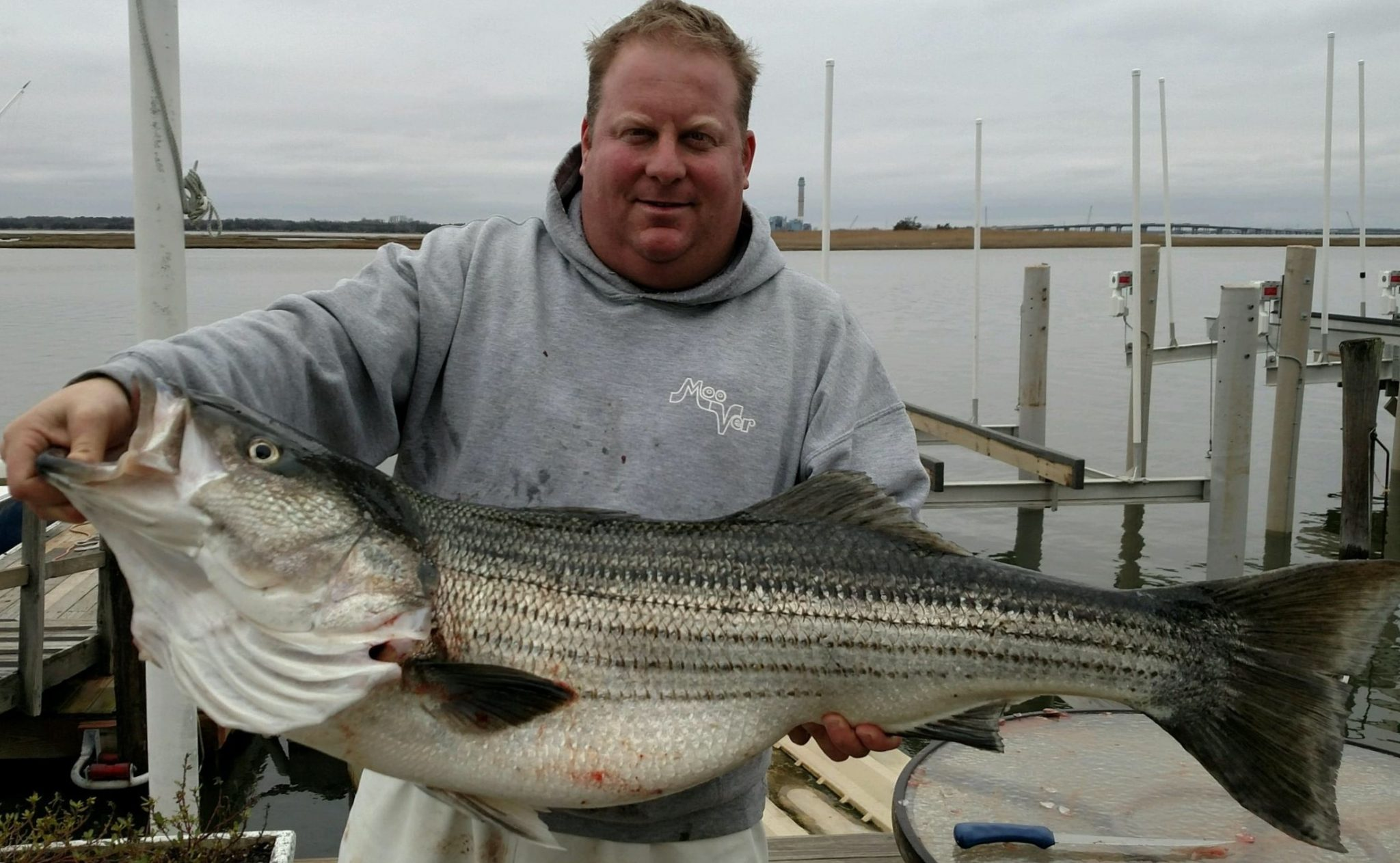 Striped Bass Bite - Moover Fishing Adventures